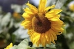 It's not too late to start your summer garden project