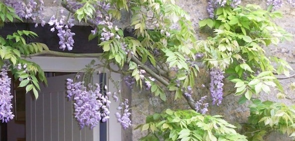 Guest Blog: Planting to Enhance your Garden Buildings